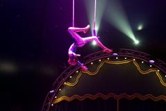 lotti_circus_018
